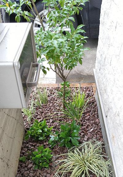 単幹樹形なら地面への風通しも良好に