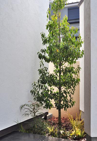 狭小部へ緑を添える単幹樹形の庭木