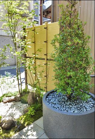 円形プランターにマッチする単幹樹形の木