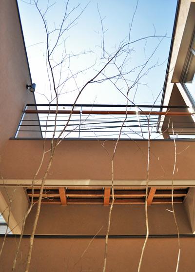 寄せ植えして自生地を再現する単幹樹形