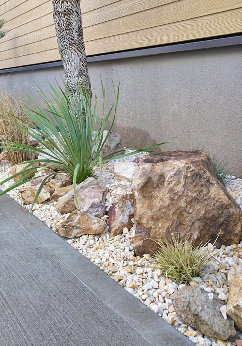 乾燥に強い植物は様々なメリットが