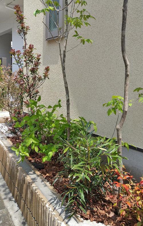 自然で賑やかに見せる低木植栽