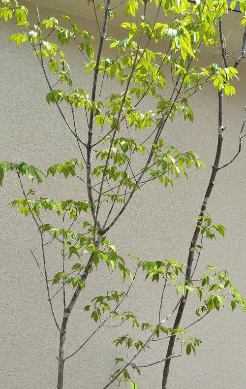 一見して寄せ植えには見えない植栽